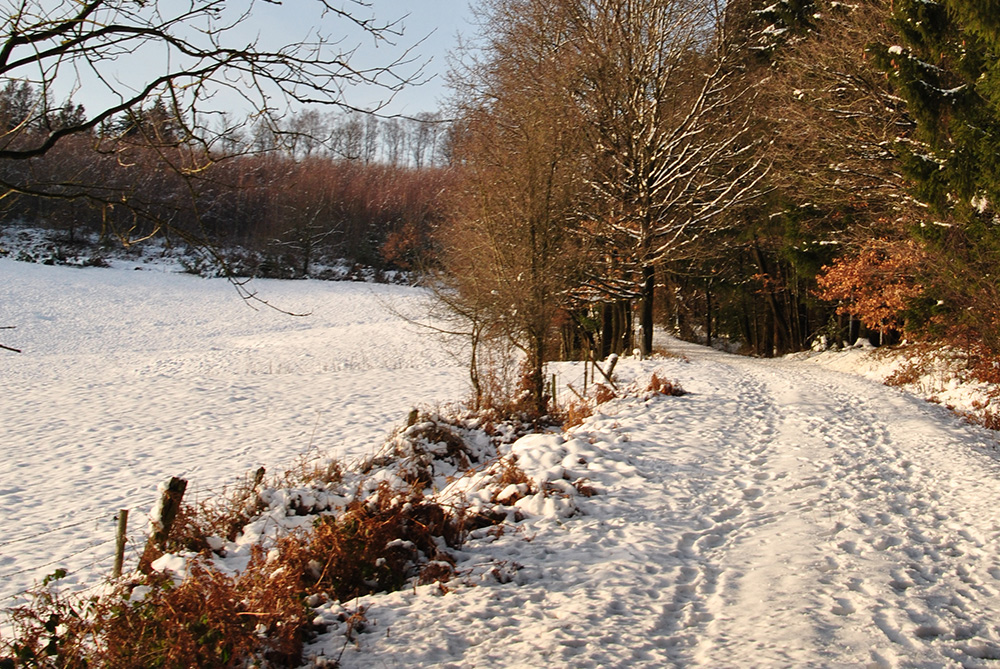 Winterwandern auf dem Panoramasteig