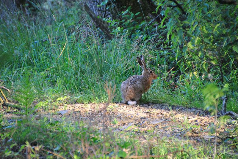 Morgens-im-Wald-24-Juni